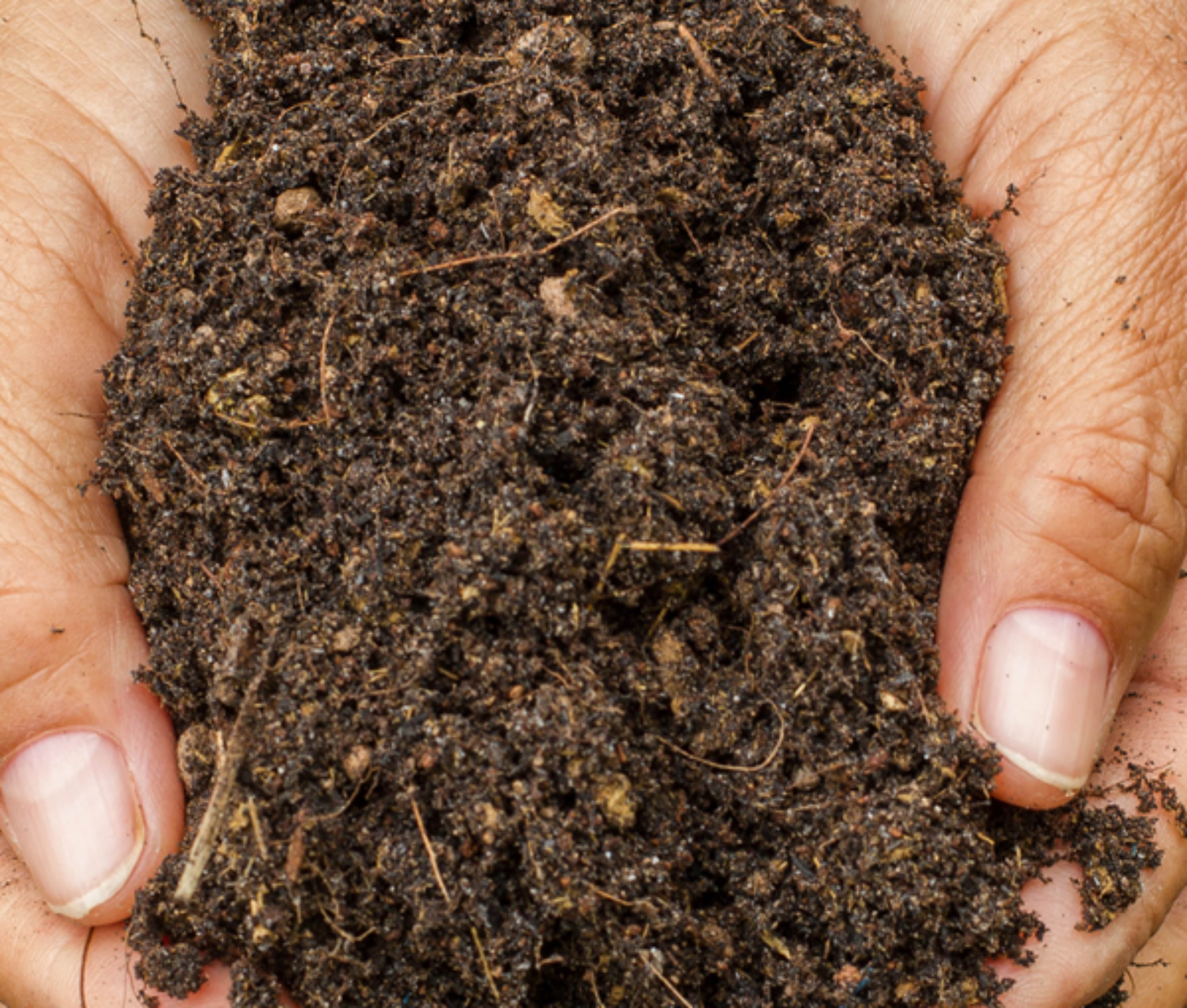 Person holding soil
