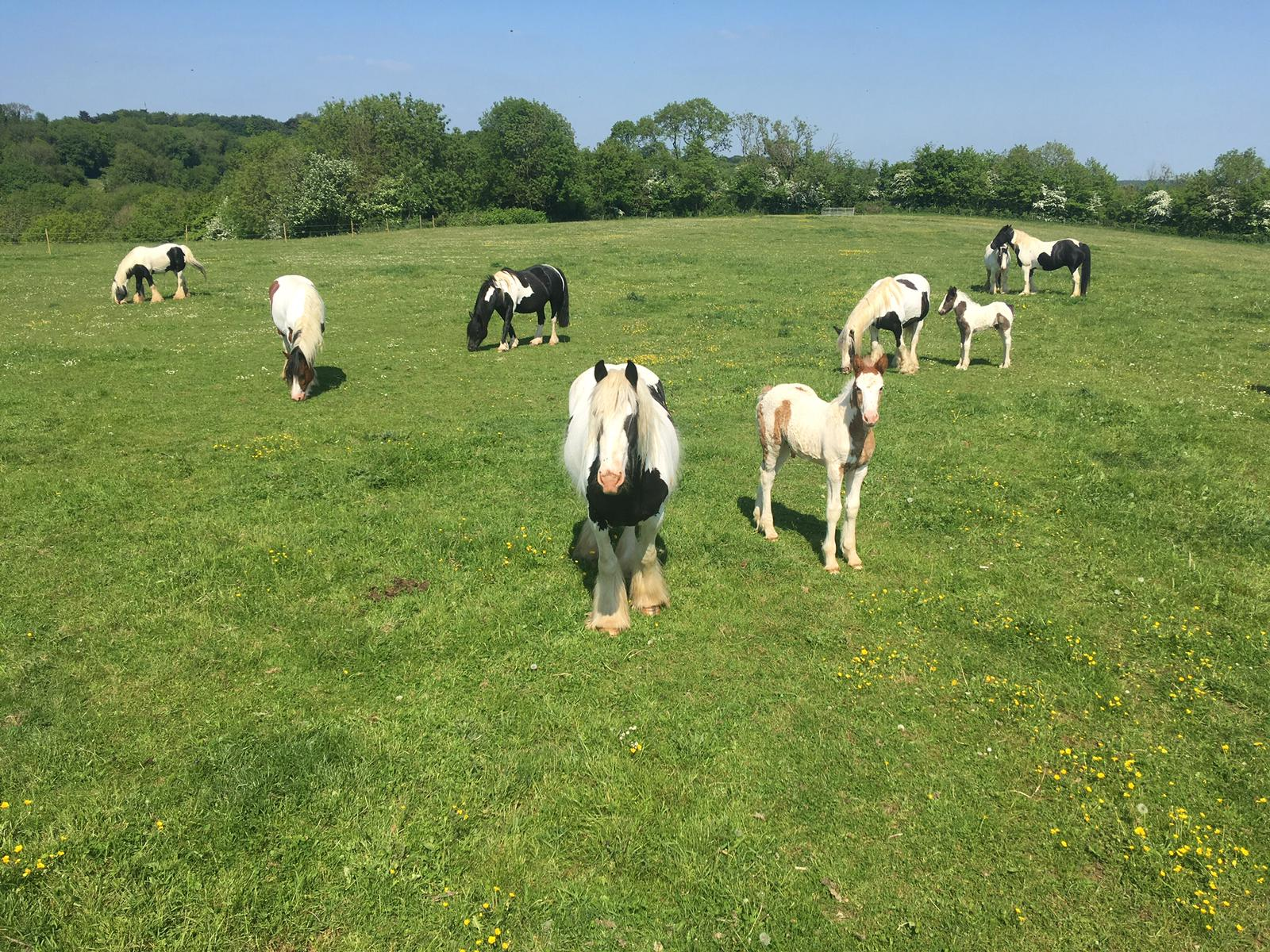 mares and foals 2018