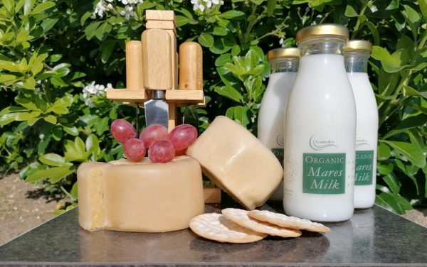Organic Mares Milk & Cheese