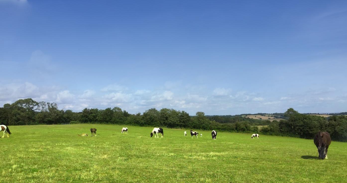 Mares Milk - Horse fields